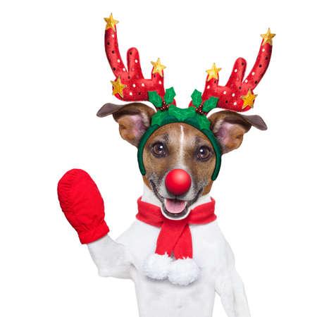 reindeer christmas: perro reno con una nariz roja y agitando la mano aisladas sobre fondo blanco Foto de archivo