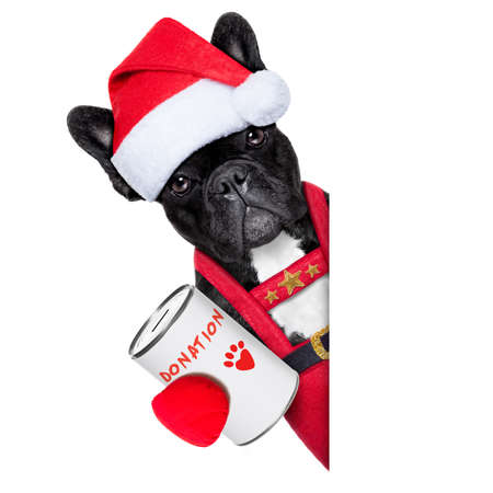 reindeer french bulldog with a donation can , collecting money for  charity, as a winter edition , isolated on white background photo