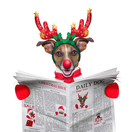 funny animals: jack russell dog   dressed as santa reading the christmas issue on the newspaper, isolated on white background Stock Photo
