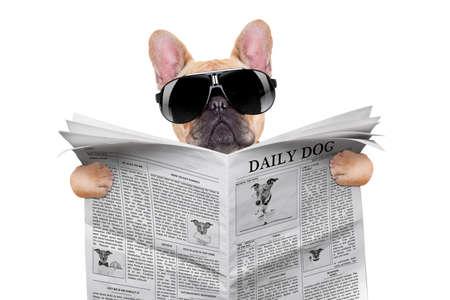 patas de perros: bulldog franc�s leyendo el peri�dico, con gafas de sol frescas, aislados en fondo blanco