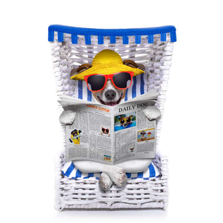 read news: dog reading newspaper on a beach chair with sunglasses and yellow hat , isolated on white background