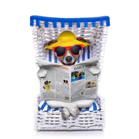 chillen: Hund liest Zeitung auf einem Liegestuhl mit Sonnenbrille und gelben Hut, isoliert auf weißem Hintergrund
