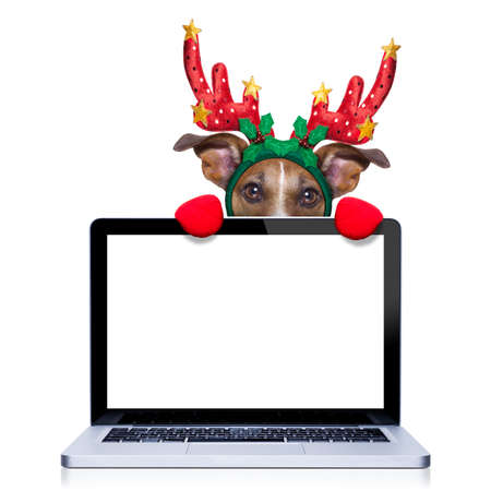 santa moose: christmas dog with reindeer costume behind a laptop computer pc screen,  isolated on white background