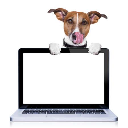 patas de perros: jack russell terrier perro lamiendo con la lengua detr�s de una pantalla de ordenador port�til de la PC, aislado en fondo blanco Foto de archivo