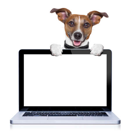 jack russell terrier dog  behind a pc computer screen, isolated on white background