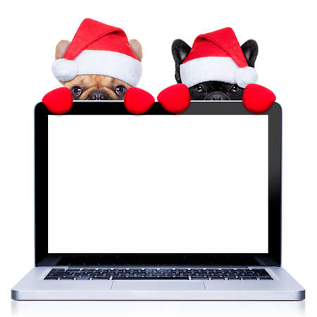 santa moose: christmas couple of two  dogs with santa claus costume behind a laptop computer pc, isolated on white background