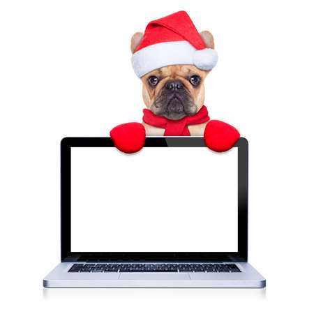santa moose: christmas  fawn french bulldog dog with santa claus  costume behind a laptop computer pc, isolated on white background Stock Photo