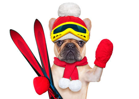 goggle: fawn french bulldog dog with ski equipment, wearing goggles , gloves , a hat and a red scarf, isolated on white background