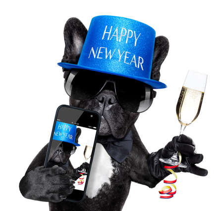 compleanno: cane bulldog francese pronto a brindare per capodanno, prendendo un Selfie o foto, isolato su sfondo bianco Archivio Fotografico