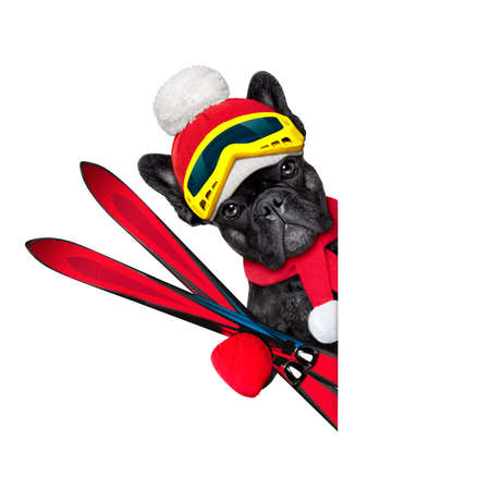 french bulldog dog with ski equipment, wearing goggles , gloves , a hat and a red scarf,beside a white blank banner or placard, isolated on white background photo