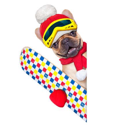 chien: bouledogue fran�ais fauve chien avec du mat�riel de ski, le port de lunettes, des gants, un chapeau et une �charpe rouge, � c�t� d'une banni�re ou une affiche vierge blanc, isol� sur fond blanc
