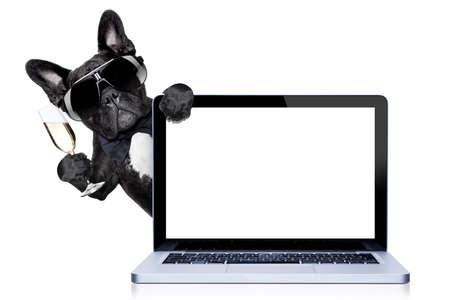 sunglasses: perro bulldog francés listo para brindar por Fin de año, detrás de un ordenador PC portátil, aislado en fondo blanco Foto de archivo
