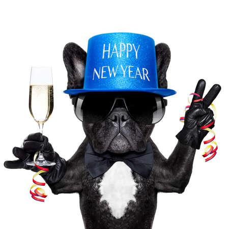 nouvel an: bouledogue français avec un verre de champagne et de la victoire ou les doigts de paix
