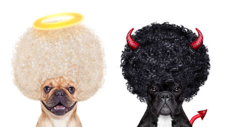 devil horns: Devil and Angel fawn french bulldog dogs sitting side by side deciding between right and wrong , good or bad, isolated on white background Stock Photo