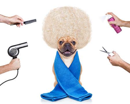 kapster: kapper hond klaar om te kijken mooi in het wellness-spa, geïsoleerd op een witte achtergrond Stockfoto