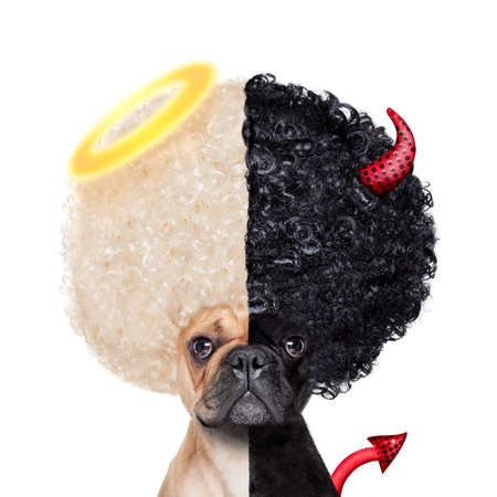 Devil and Angel fawn french bulldog dogs half face black and white ,deciding between right and wrong , good or bad, isolated on white background Banco de Imagens