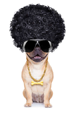 gangster cool afro dog wit gold chain and sunglasses, isolated on white background photo