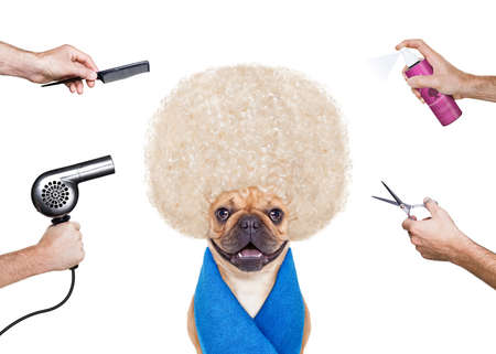 hairdresser dog ready to look beautiful at the wellness spa, isolated on white background photo