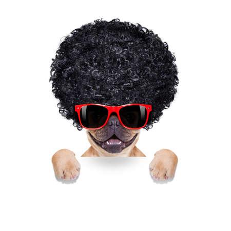 loco: bulldog francés fresco con las gafas de sol que desgastan un afro negro mira peluca rizada, sonriendo a usted, aislado sobre fondo blanco
