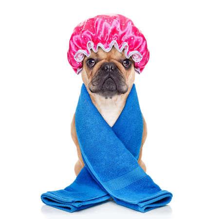 franse bulldog hond klaar om een bad of een douche dragen van een badmuts en handdoek hebben, geïsoleerd op een witte achtergrond Stockfoto