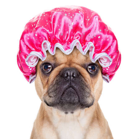 pet grooming: french bulldog dog ready to have a bath or a shower wearing a bathing cap, isolated on white background