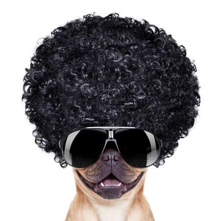 buldog: bulldog francés fresco con las gafas de sol que desgastan un afro negro mira peluca rizada, sonriendo a usted, aislado sobre fondo blanco