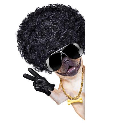 koele gangster franse bulldog hond met vrede en overwinning vingers, geïsoleerd op een witte achtergrond Stockfoto