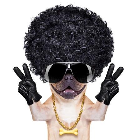 chien: fra�che gangster fran�ais bulldog chien avec doigts de paix et de victoire, isol� sur fond blanc Banque d'images