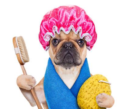 ba�arse: perro bulldog franc�s con un tratamiento spa o wellness con gorro de ducha, aislado en fondo blanco