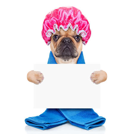 scrub cap: french bulldog dog having a spa or wellness treatment with shower cap holding a white blank banner or placard , isolated on white background Stock Photo