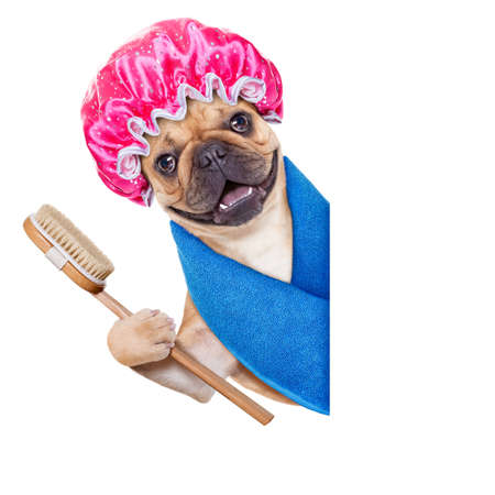 dog grooming: french bulldog dog having a spa or wellness treatment with shower cap beside a white blank banner or placard , isolated on white background