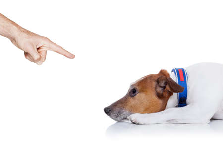 rant: bad behavior dog being punished by owner with finger pointing at him, isolated on white background Stock Photo