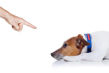 perro malo comportamiento siendo castigado por el propietario señalando con el dedo a él, aislado en fondo blanco Foto de archivo