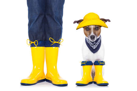 jack russell dog sitting and waiting to go for a walk with owner wearing rain boots, isolated on white background