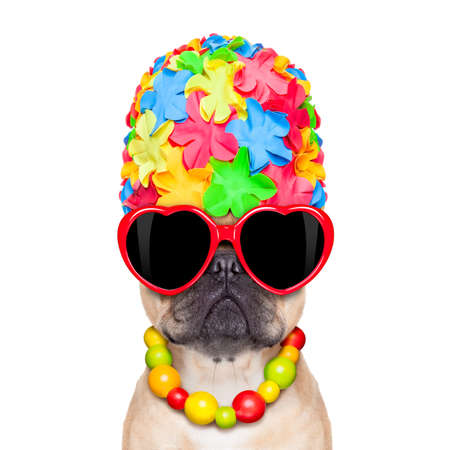 fawn french bulldog dog ready for summer vacation or holidays wearing sunglasses, isolated on white background photo