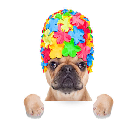 fawn french bulldog dog ready for summer vacation or holidays behind  blank banner or placard, isolated on white background photo