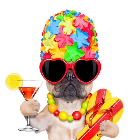 fiesta: adular perro bulldog francés listo para las vacaciones de verano o vacaciones, con gafas de sol y un cóctel, aislado sobre fondo blanco Foto de archivo