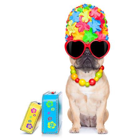 sonnenbaden: Kitz Französisch Bulldog Hund bereit für Sommerurlaub oder Ferien, neben Gepäck, isoliert auf weißem Hintergrund Lizenzfreie Bilder