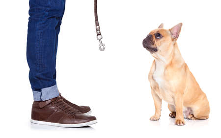 french bulldog puppy: fawn bulldog dog and owner ready to go for a walk, or dog being punished  for a bad behavior