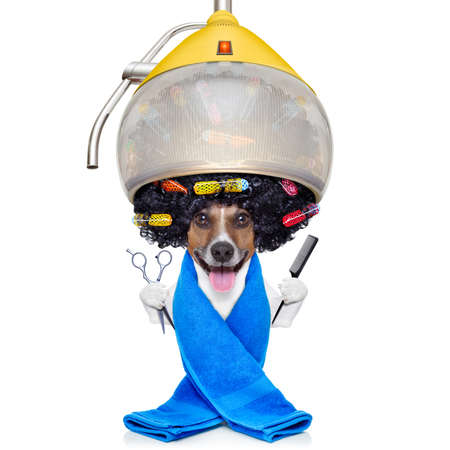 pets background: jack russell dog at the groomer or hairdresser, under  drying hood,holding a scissors and a hair comb, isolated on white background