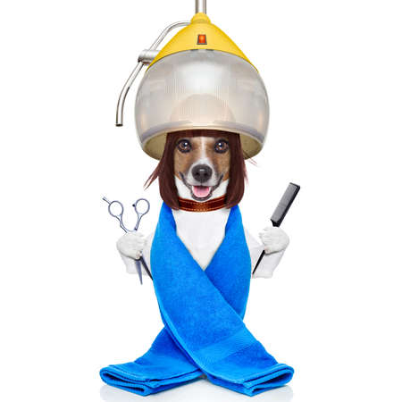 groomer: jack russell dog at the groomer or hairdresser, under  drying hood,holding a scissors and a hair comb, isolated on white background