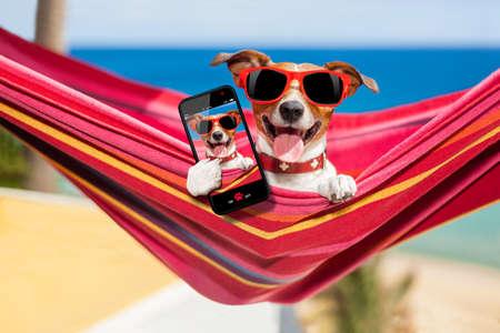 playas tropicales: perro se relaja en una hamaca rojo de lujo de tomar un Autofoto y compartir la diversi�n con los amigos