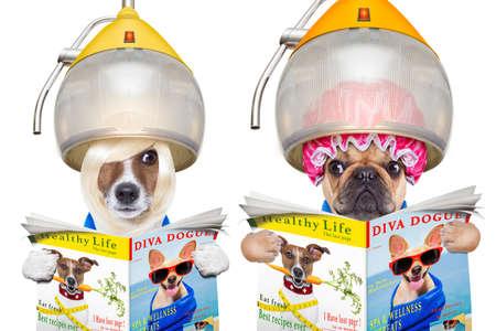 secador de pelo: un par de perros que buscan el uno al otro y espionaje, con envidia, leyendo una revista, aislado en fondo blanco Foto de archivo