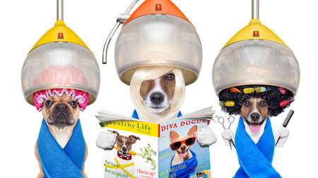 spas: Gruppe oder ein Team von Hunden am Pistenfahrzeug oder Friseur, unter Trockenhaube, mit Schere, Haarkamm, eine Zeitschrift lesen, isoliert auf weißem Hintergrund