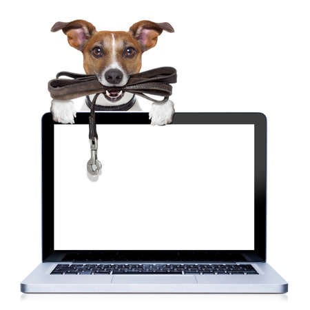 jack russell terrier dog waiting to go for a walk with owner, leather leash in mouth, behind pc computer screen , isolated on white background Stock Photo
