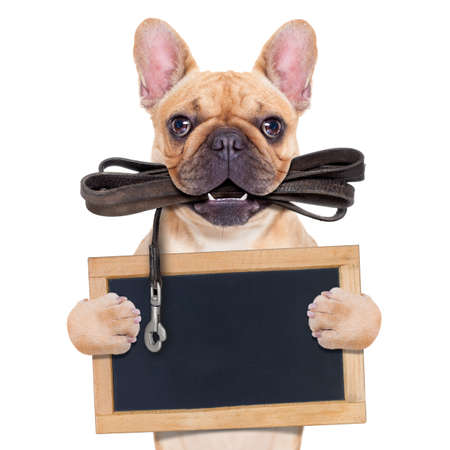 Kitz Französisch Bulldog mit Lederleine bereit für einen Spaziergang durch den Besitzer, die eine leere Tafel, isoliert auf weißem Hintergrund isoliert