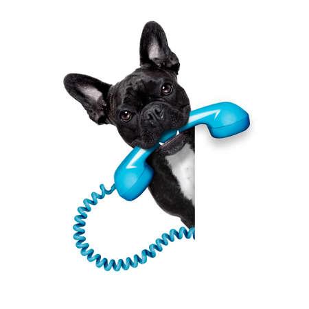 papeles oficina: perro bulldog franc�s que sostiene un tel�fono retro viejo detr�s de una pancarta vac�o blanco o cartel, aislado en fondo blanco