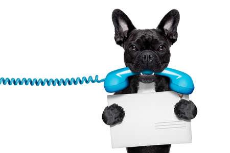 Bouledogue français chien tenant une vieille rétro téléphone et une carte postale ou une enveloppe lettre vide, isolé sur fond blanc Banque d'images - 37038518