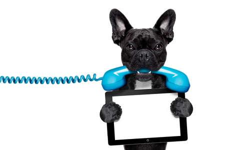 perros graciosos: perro bulldog franc�s que sostiene un tel�fono retro de edad y una tablilla en blanco ordenador pc ebook, aislado en fondo blanco