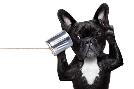 french bulldog dog listening or talking on the can telephone, isolated on white background Foto de archivo